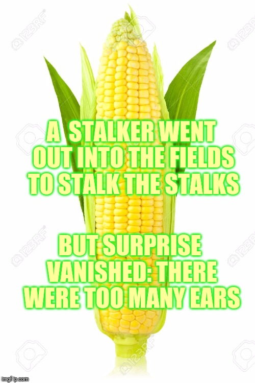 Memes, Corn | A  STALKER WENT OUT INTO THE FIELDS TO STALK THE STALKS BUT SURPRISE VANISHED: THERE WERE TOO MANY EARS | image tagged in memes,corn | made w/ Imgflip meme maker