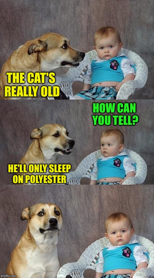 Dad Joke Dog Meme | THE CAT'S REALLY OLD HE'LL ONLY SLEEP ON POLYESTER HOW CAN YOU TELL? | image tagged in memes,dad joke dog | made w/ Imgflip meme maker
