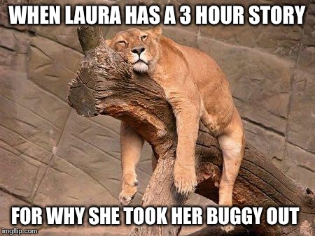 sleeping lion | WHEN LAURA HAS A 3 HOUR STORY FOR WHY SHE TOOK HER BUGGY OUT | image tagged in sleeping lion | made w/ Imgflip meme maker