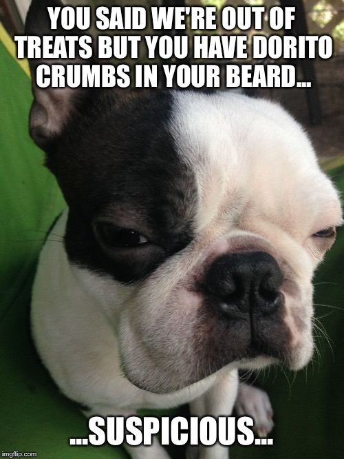 YOU SAID WE'RE OUT OF TREATS BUT YOU HAVE DORITO CRUMBS IN YOUR BEARD... ...SUSPICIOUS... | image tagged in boston terrier | made w/ Imgflip meme maker