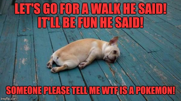 A stolen meme event week, or something.... | LET'S GO FOR A WALK HE SAID!  IT'LL BE FUN HE SAID! SOMEONE PLEASE TELL ME WTF IS A POKEMON! | image tagged in tired dog,memes,funny,funny memes,dank memes | made w/ Imgflip meme maker