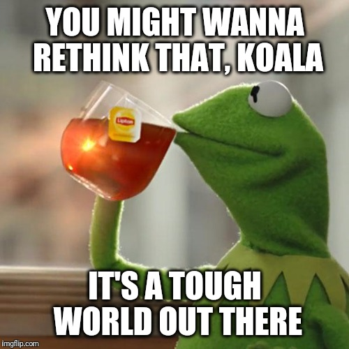 But Thats None Of My Business Meme | YOU MIGHT WANNA RETHINK THAT, KOALA IT'S A TOUGH WORLD OUT THERE | image tagged in memes,but thats none of my business,kermit the frog | made w/ Imgflip meme maker