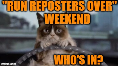 "Grumpy Cat driving | ""RUN REPOSTERS OVER"" WEEKEND WHO'S IN? 