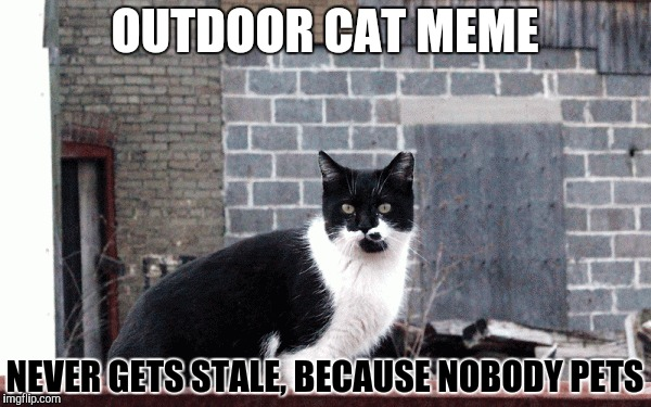 OUTDOOR CAT MEME NEVER GETS STALE, BECAUSE NOBODY PETS | made w/ Imgflip meme maker