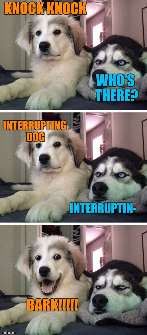 Bad Jokes | KNOCK KNOCK WHO'S THERE? INTERRUPTING DOG INTERRUPTIN- BARK!!!!! | image tagged in bad pun dogs,knock knock | made w/ Imgflip meme maker