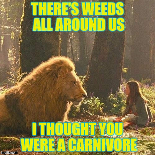 THERE'S WEEDS ALL AROUND US I THOUGHT YOU WERE A CARNIVORE | made w/ Imgflip meme maker