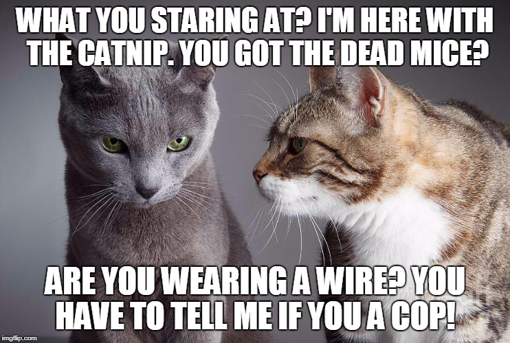 Catnip Calamity | WHAT YOU STARING AT? I'M HERE WITH THE CATNIP. YOU GOT THE DEAD MICE? ARE YOU WEARING A WIRE? YOU HAVE TO TELL ME IF YOU A COP! | image tagged in two cats | made w/ Imgflip meme maker