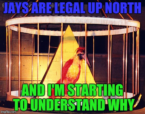 JAYS ARE LEGAL UP NORTH AND I'M STARTING TO UNDERSTAND WHY | made w/ Imgflip meme maker