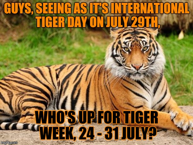 Who's up for it? 24 - 31 July, Tiger week, by me, TigerLegend1046 | GUYS, SEEING AS IT'S INTERNATIONAL TIGER DAY ON JULY 29TH, WHO'S UP FOR TIGER WEEK, 24 - 31 JULY? | image tagged in srsly tiger,memes,tiger,tiger day,tiger week,who's up for it | made w/ Imgflip meme maker
