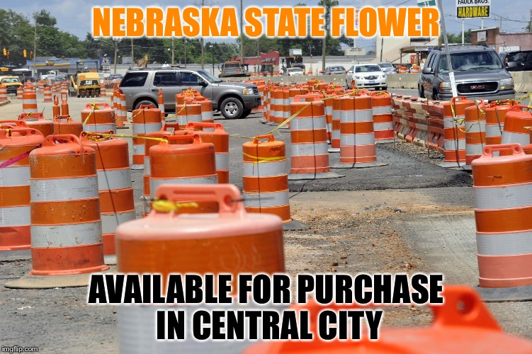 NEBRASKA STATE FLOWER AVAILABLE FOR PURCHASE IN CENTRAL CITY | image tagged in nebraska state flower | made w/ Imgflip meme maker
