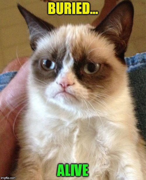 Grumpy Cat Meme | BURIED... ALIVE | image tagged in memes,grumpy cat | made w/ Imgflip meme maker