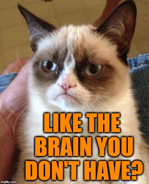 Grumpy Cat Meme | LIKE THE BRAIN YOU DON'T HAVE? | image tagged in memes,grumpy cat | made w/ Imgflip meme maker