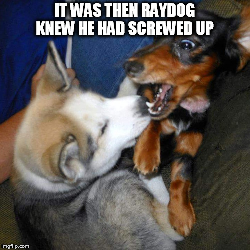 IT WAS THEN RAYDOG KNEW HE HAD SCREWED UP | image tagged in dog fight | made w/ Imgflip meme maker
