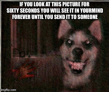 IF YOU LOOK AT THIS PICTURE FOR SIXTY SECONDS YOU WILL SEE IT IN YOURMIND FOREVER UNTIL YOU SEND IT TO SOMEONE | image tagged in creepypastas,smile dog,i will find you and kill you,bloody hand in lower left corner | made w/ Imgflip meme maker
