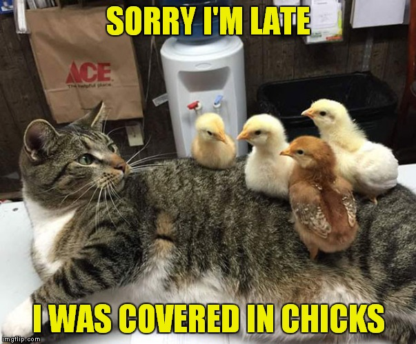 SORRY I'M LATE I WAS COVERED IN CHICKS | made w/ Imgflip meme maker