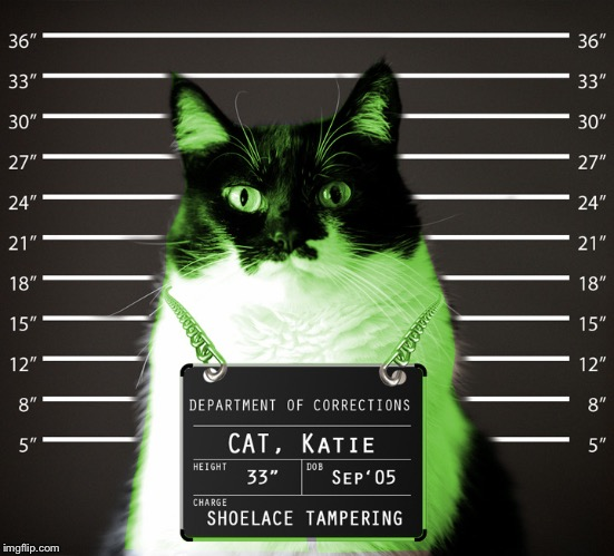 RayCat Incarcerated | :) | image tagged in raycat incarcerated | made w/ Imgflip meme maker