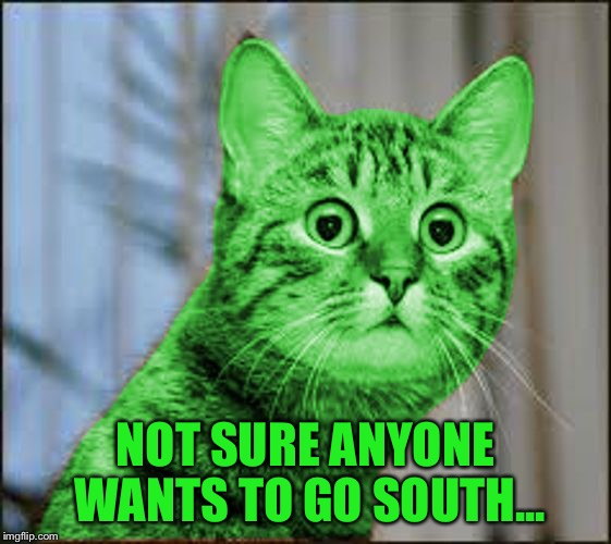 RayCat WTF | NOT SURE ANYONE WANTS TO GO SOUTH... | image tagged in raycat wtf | made w/ Imgflip meme maker