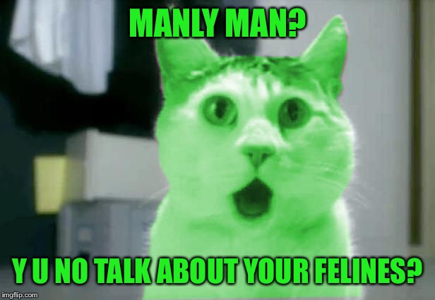 OMG RayCat | MANLY MAN? Y U NO TALK ABOUT YOUR FELINES? | image tagged in omg raycat | made w/ Imgflip meme maker