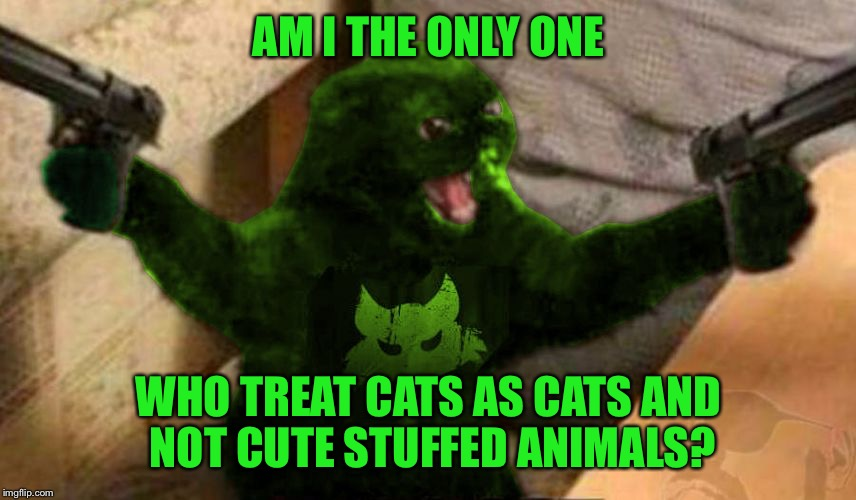 RayCat Angry | AM I THE ONLY ONE WHO TREAT CATS AS CATS AND NOT CUTE STUFFED ANIMALS? | image tagged in raycat angry | made w/ Imgflip meme maker