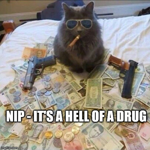 NIP - IT'S A HELL OF A DRUG | made w/ Imgflip meme maker