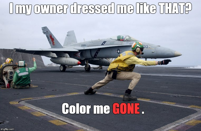 launch | I my owner dressed me like THAT? Color me GONE . GONE | image tagged in launch | made w/ Imgflip meme maker