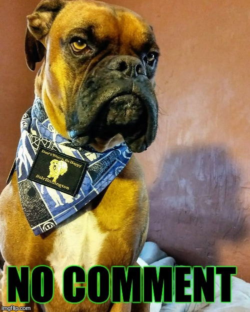 Grumpy Dog | NO COMMENT | image tagged in grumpy dog | made w/ Imgflip meme maker