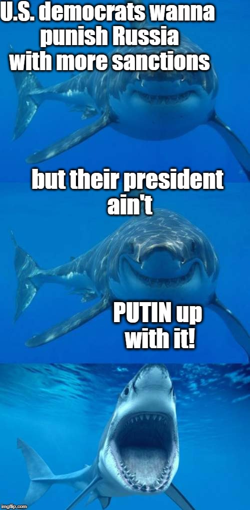 Bad Shark Pun  | U.S. democrats wanna punish Russia with more sanctions but their president ain't PUTIN up with it! | image tagged in bad shark pun | made w/ Imgflip meme maker
