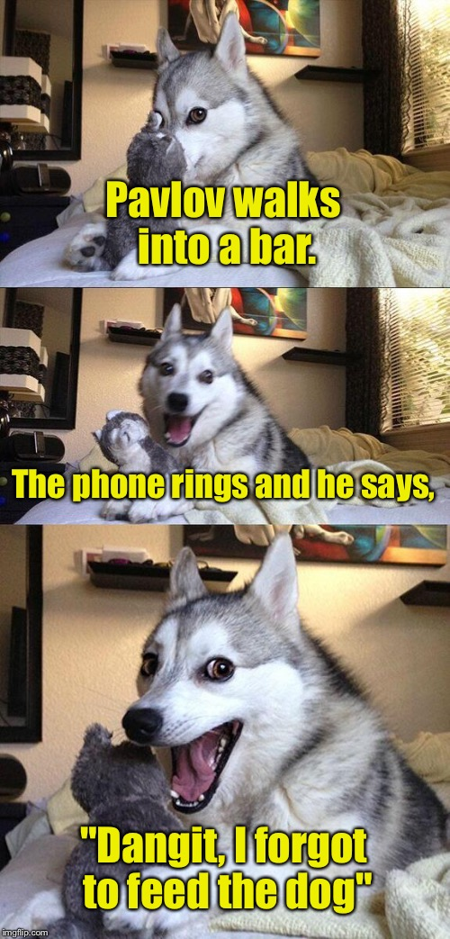 "Bad Pun Dog Meme | Pavlov walks into a bar. The phone rings and he says, ""Dangit, I forgot to feed the dog"" 