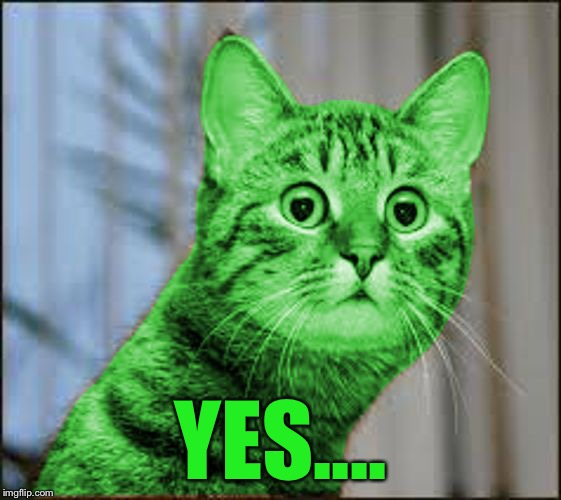 RayCat WTF | YES.... | image tagged in raycat wtf | made w/ Imgflip meme maker