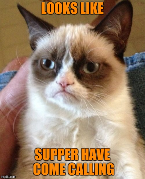 Grumpy Cat Meme | LOOKS LIKE SUPPER HAVE COME CALLING | image tagged in memes,grumpy cat | made w/ Imgflip meme maker