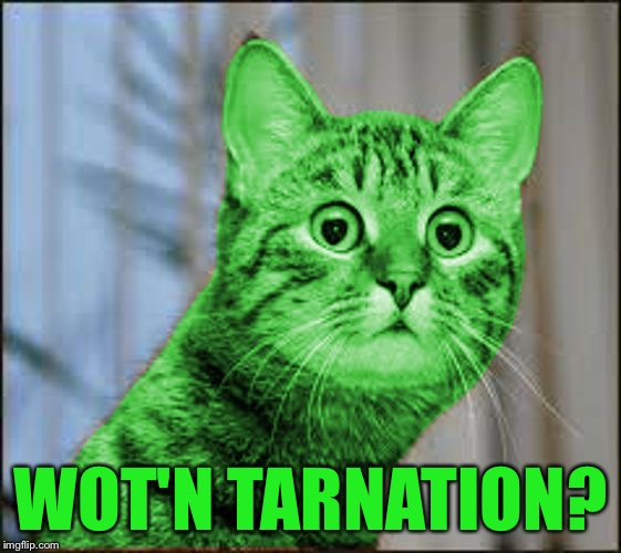 RayCat WTF | WOT'N TARNATION? | image tagged in raycat wtf | made w/ Imgflip meme maker