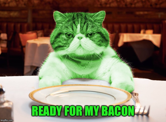 RayCat Hungry | READY FOR MY BACON | image tagged in raycat hungry | made w/ Imgflip meme maker