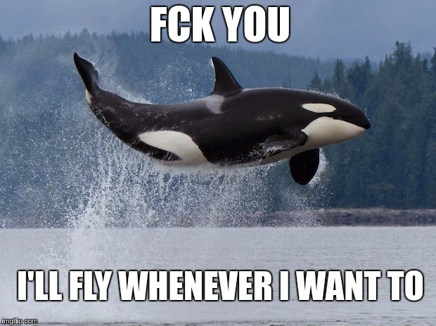 Fckn Evolution | FCK YOU I'LL FLY WHENEVER I WANT TO | image tagged in memes,funny,orca,fly,just do it | made w/ Imgflip meme maker
