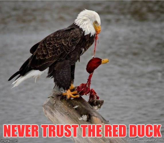 NEVER TRUST THE RED DUCK | made w/ Imgflip meme maker