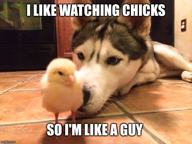 I LIKE WATCHING CHICKS SO I'M LIKE A GUY | made w/ Imgflip meme maker