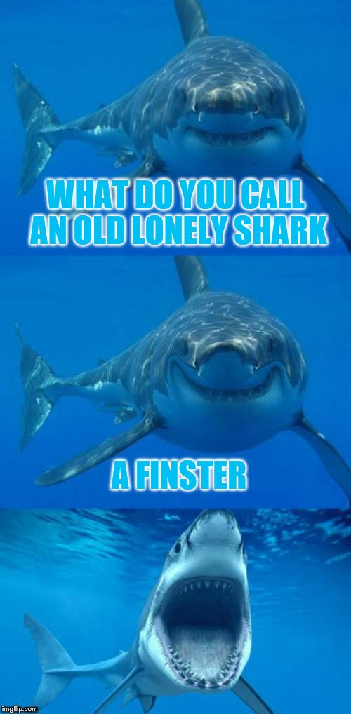 Shark Week - A Raydog Event | WHAT DO YOU CALL AN OLD LONELY SHARK A FINSTER | image tagged in bad shark pun,shark week | made w/ Imgflip meme maker