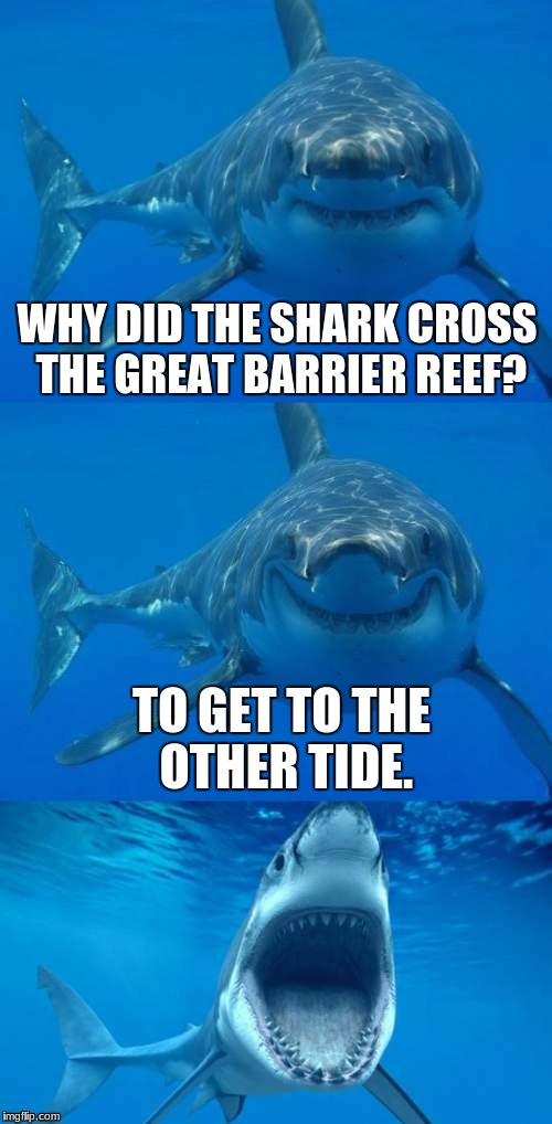 Bad Shark Pun  | WHY DID THE SHARK CROSS THE GREAT BARRIER REEF? TO GET TO THE OTHER TIDE. | image tagged in bad shark pun | made w/ Imgflip meme maker