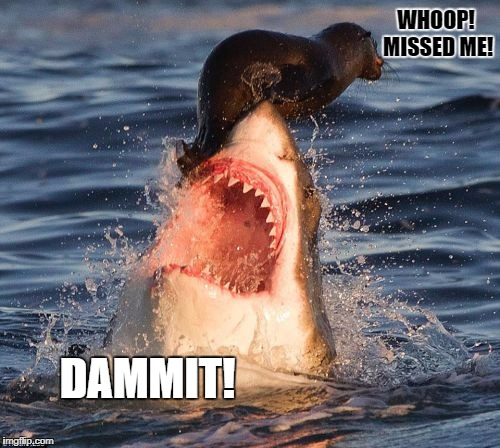 Shark week, a Raydog and Discovery Channel Event, 23rd-30th | WHOOP! MISSED ME! DAMMIT! | image tagged in memes,travelonshark | made w/ Imgflip meme maker