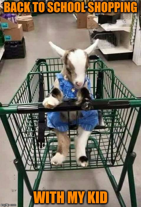 Baaaaaaaaaack to School Time |  BACK TO SCHOOL SHOPPING; WITH MY KID | image tagged in memes,funny memes | made w/ Imgflip meme maker