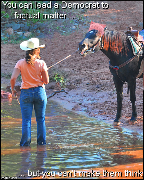 You can lead a horse to water.... | image tagged in democrats,retarded liberal protesters,funny,lol,horses,current events | made w/ Imgflip meme maker