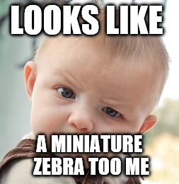 Skeptical Baby Meme | LOOKS LIKE A MINIATURE ZEBRA TOO ME | image tagged in memes,skeptical baby | made w/ Imgflip meme maker