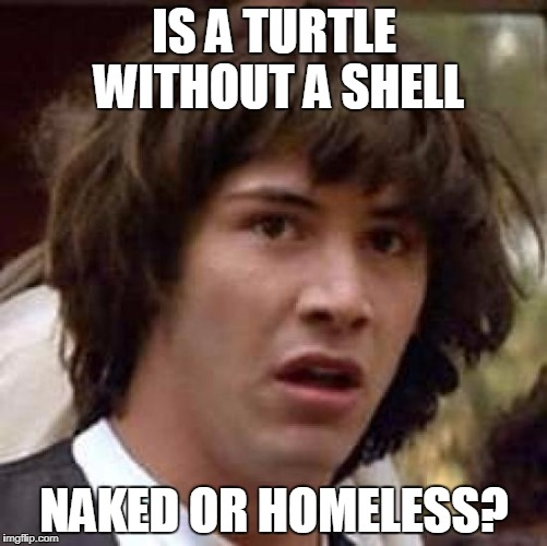 Conspiracy Keanu Meme | IS A TURTLE WITHOUT A SHELL NAKED OR HOMELESS? | image tagged in memes,conspiracy keanu | made w/ Imgflip meme maker