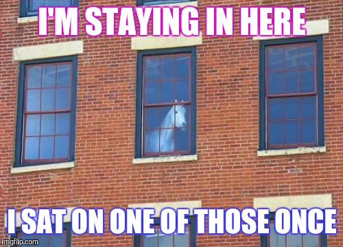 Memes     horse  | I'M STAYING IN HERE I SAT ON ONE OF THOSE ONCE | image tagged in memes     horse | made w/ Imgflip meme maker