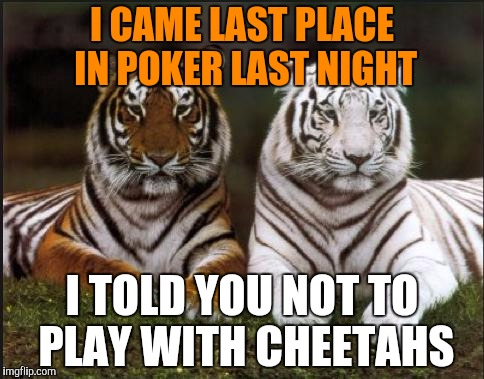 Tiger week, July 24 - 31, a TigerLegend1046 event | I CAME LAST PLACE IN POKER LAST NIGHT I TOLD YOU NOT TO PLAY WITH CHEETAHS | image tagged in two tigers,memes,tiger week,tigerlegend1046 | made w/ Imgflip meme maker