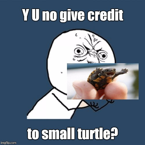 Y U No Meme | Y U no give credit to small turtle? | image tagged in memes,y u no | made w/ Imgflip meme maker