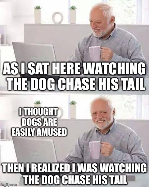 Hide the Pain Harold Meme | AS I SAT HERE WATCHING THE DOG CHASE HIS TAIL I THOUGHT DOGS ARE EASILY AMUSED THEN I REALIZED I WAS WATCHING THE DOG CHASE HIS TAIL | image tagged in memes,hide the pain harold,repost,reposts,stolen memes week | made w/ Imgflip meme maker