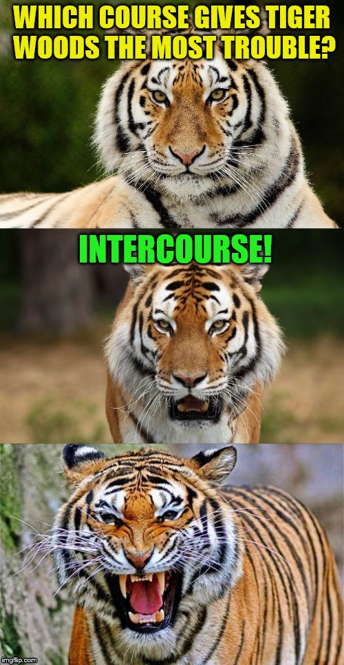 Tiger Puns (Tiger Week July 24 - 31... A TigerLegend1046 Event) | WHICH COURSE GIVES TIGER WOODS THE MOST TROUBLE? INTERCOURSE! | image tagged in tiger puns,tiger woods,jokes,memes,tiger week,laughs | made w/ Imgflip meme maker