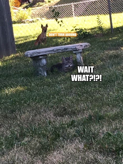 Dog and Cat | WAIT WHAT?!?! DON'T TURN AROUND | image tagged in dogs,cats,house | made w/ Imgflip meme maker