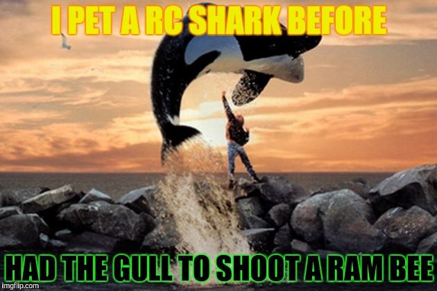 I PET A RC SHARK BEFORE HAD THE GULL TO SHOOT A RAM BEE | made w/ Imgflip meme maker