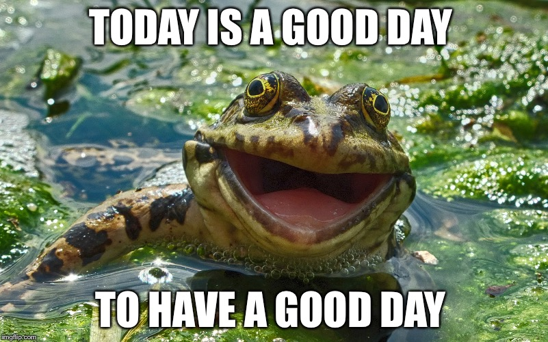 Happy Monday! | TODAY IS A GOOD DAY TO HAVE A GOOD DAY | image tagged in happy frog,monday,have a good day | made w/ Imgflip meme maker
